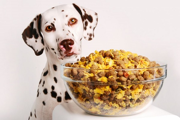 [عکس: Homemade-dog-food-3.jpg]
